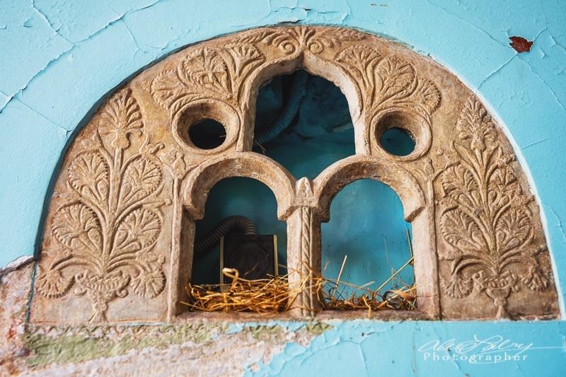Owl nest, Brasov
